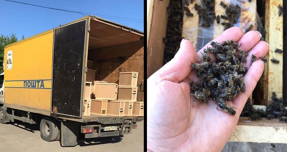 Мертві бджоли не гудуть: Укрпошта випадково вбила 8 мільйонів бджіл