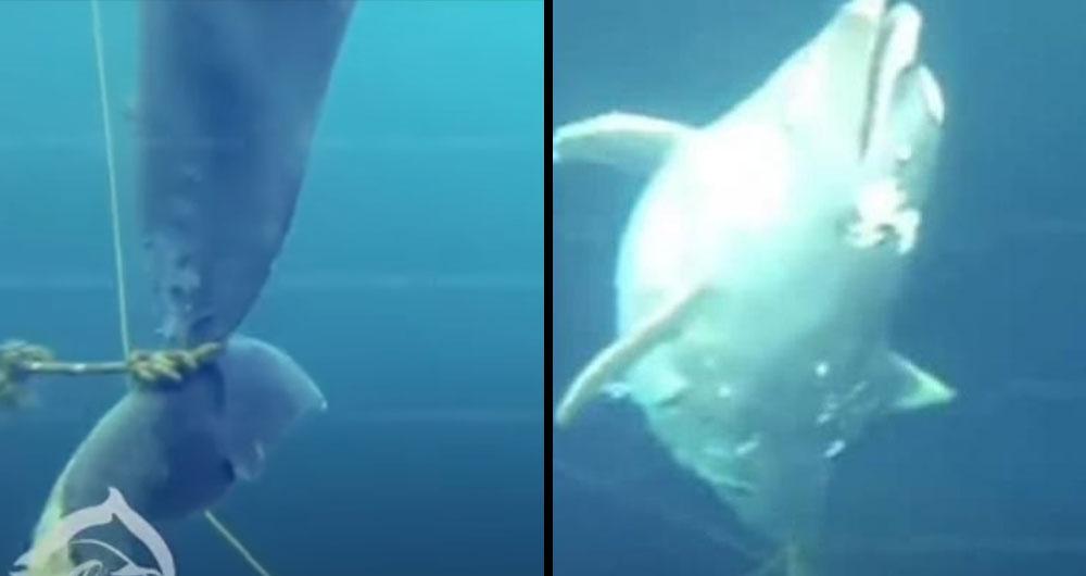 Зоозащитники: «В Черном море обнаружили привязанные к камням трупы дельфинов»