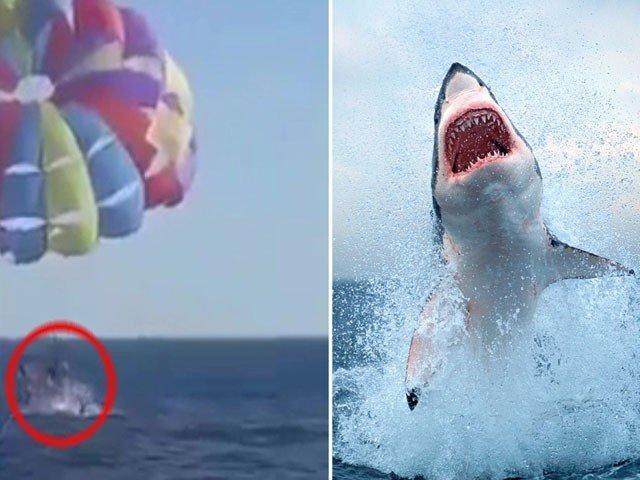 На Красном море акула выпрыгнула из воды и укусила парапланериста за ногу. Видео