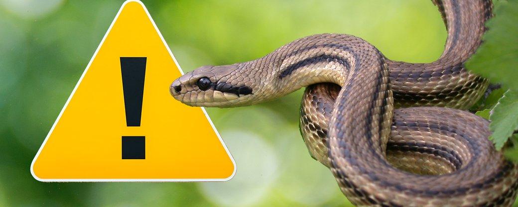 Запорожская область лидирует по количеству укусов опасных змей