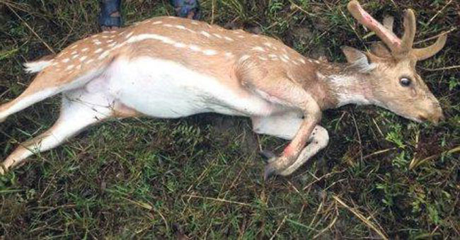 У Харкові на узбіччі дороги знайшли випотрошені трупи оленів: моторошне відео