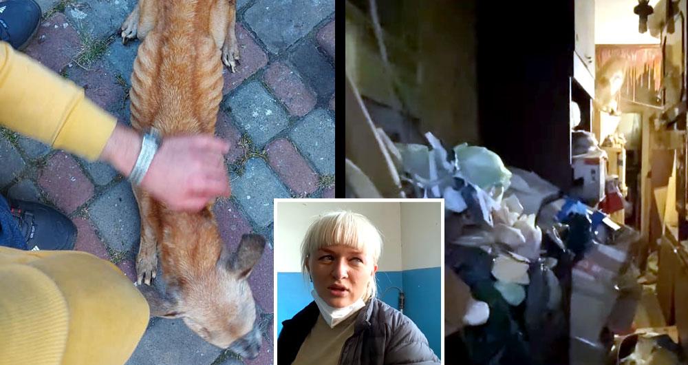 Зоозащитники Ирпеня спасли из адской квартиры 28 котов и 41 собаку. Видео