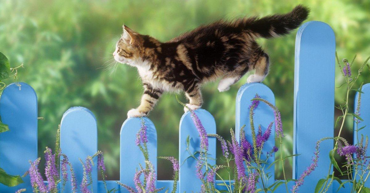 Как обеспечить кошкам укрытие, если они остались жить на даче