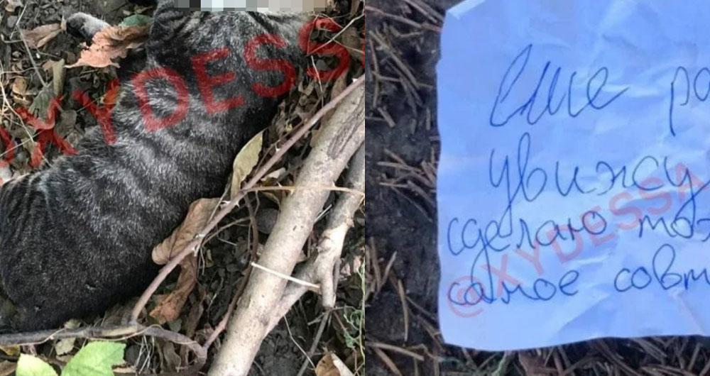 В Одесі чоловік вбив кота, виколов йому очі та погоржує зробити це ще раз
