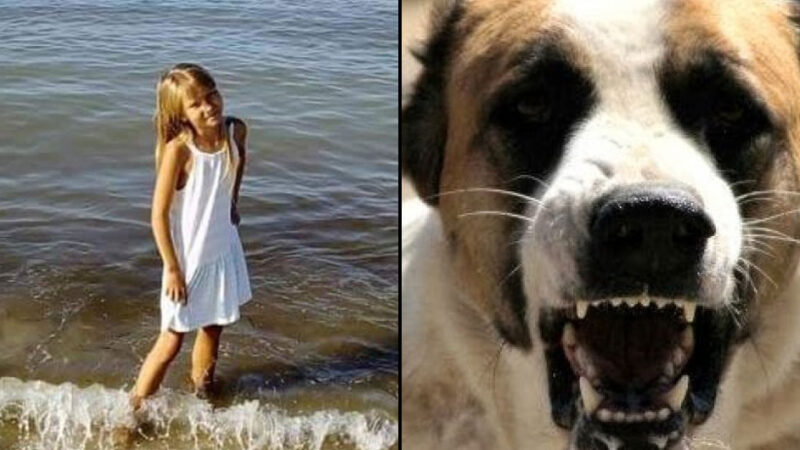 В Херсоне домашний алабай напал на 8-летнюю девочку: она в реанимации